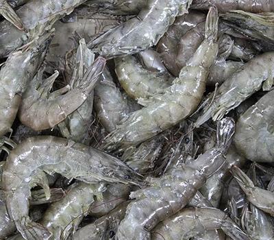 Крымские морепродукты и аквакультура
