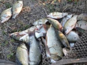 река победная джанкойский район рыбалка