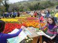 Никитский сад приглашает художников 10 апреля на Парад тюльпанов