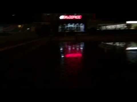 В фонтане перед зданием Ялтинского исполкома завелись лягушки