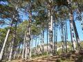 При содействии Минприроды Крыма проведена акции «Сохраним леса Крыма»