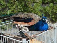 В Раздольном состоялась седьмая выставка-ярмарка певчих и декоративных птиц