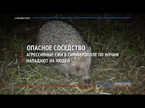 В Симферополе из-за свалок растет популяция ежей