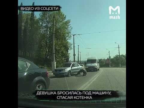 Жительница Севастополя бросилась под колеса авто, чтобы спасти котенка