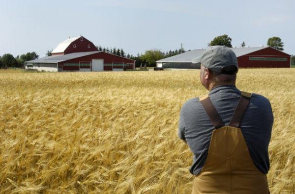 Вниманию сельхозпроизводителей!