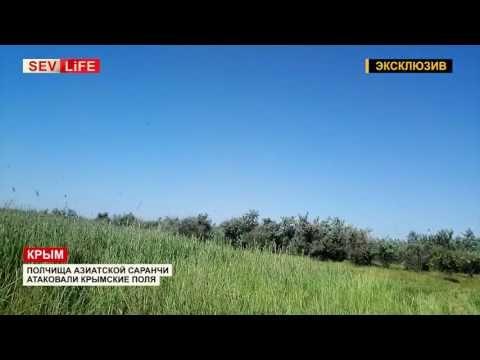 Власти Крыма выделят средства из резервного фонда на борьбу с саранчой