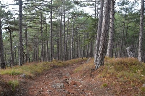 В Крыму на учет поставят более 230 тысяч га лесов