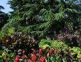 «Крымское лето» в Никитском ботаническом саду