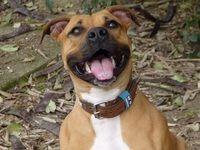 Установлен перечень пород собак, требующих особых условий содержания