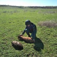 В Крыму уничтожены 2 авиационные бомбы