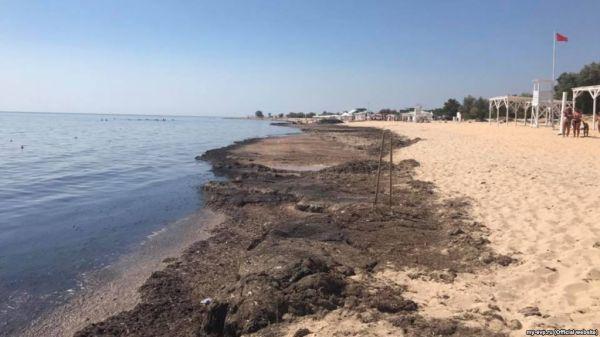 В Евпатории на пляжи выбросило тонны водорослей