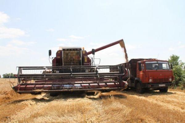 Аграрии собрали на полуострове рекордное количество ранних зерновых культур