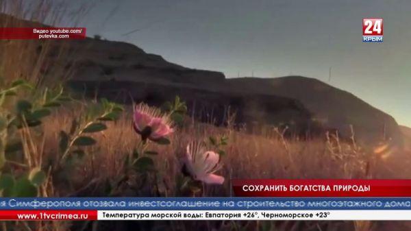 Государственная архивная служба Республики Крым подготовила выставку, посвящённую году экологии