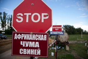 Крымчанам дали 40 миллионов за убитых свиней
