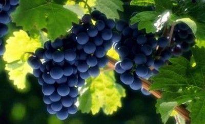 ВКрыму оккупанты реализуют завод шампанских вин «Новый Свет»