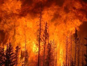 На ближайшие несколько дней в Крыму объявлена высокая пожароопасность