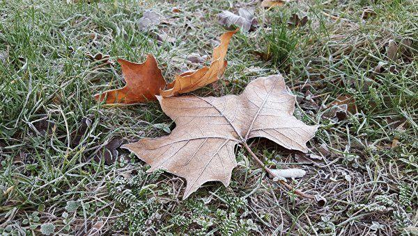 Ночные заморозки прогнозируют наКубани