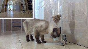 Крымская школьница придумала, как спасти кошек от ожирения
