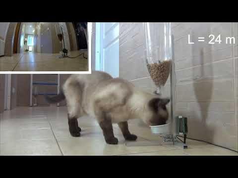 Школьница из Севастополя запатентовала тренажер-автомат для кошек