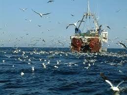 В Черном море вчетверо уменьшилась добыча биоресурсов