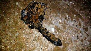 Море выбросило на берег Севастополя некое чудо-юдо