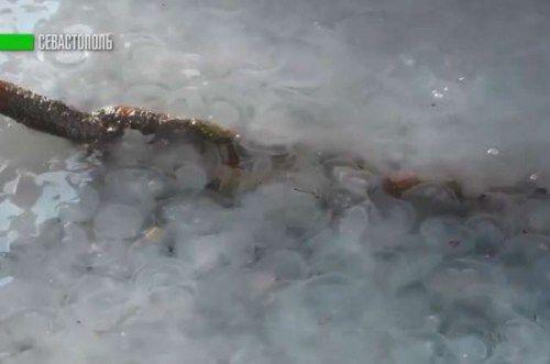Черное море в Севастополе стало белым из-за нашествия медуз