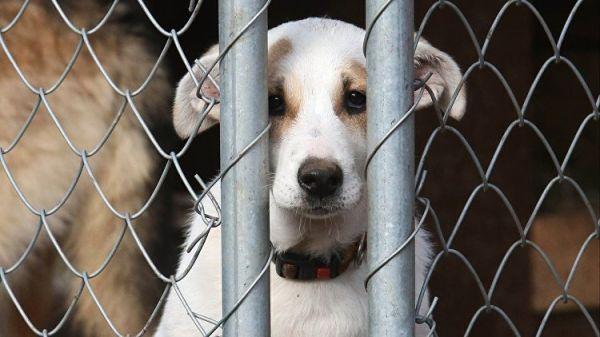 Государственная дума 13декабря может одобрить усиление санкций заиздевательство над животными
