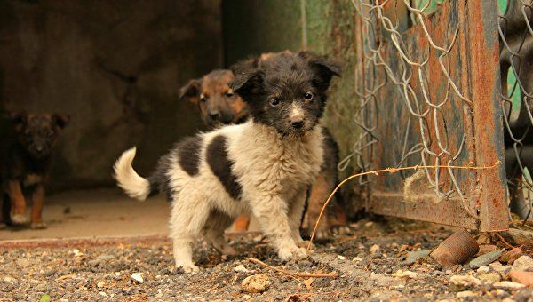 В Севастополе бездомных собак уберут с улиц
