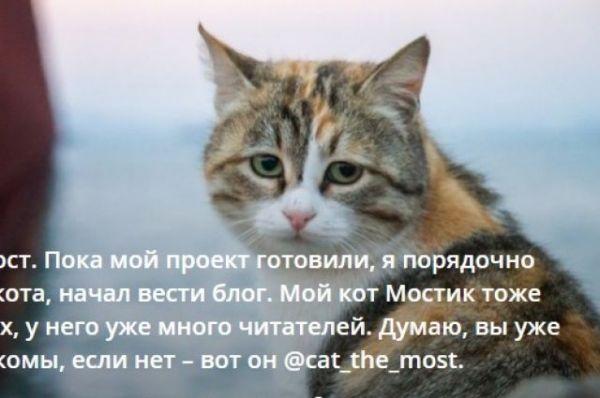 Кот Мостик «проинспектирует» строительство моста через Керченский пролив