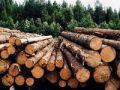 Минимущество приглашает принять участие в аукционах по продаже древесины