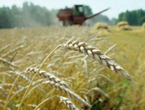 Кабмин выделил более миллиарда на поддержку аграриев