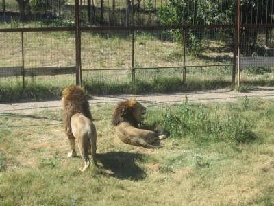 Севастополь откажет в создании зоопарка из-за святого источника