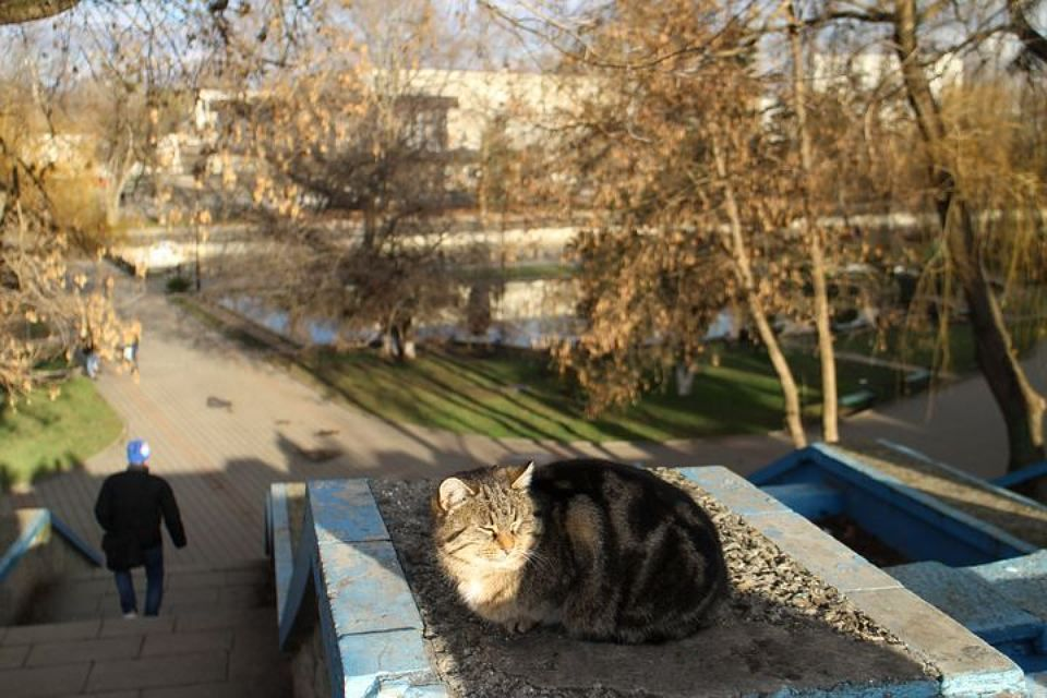 Погода в Крыму на 29 декабря: воздух прогреется до +16