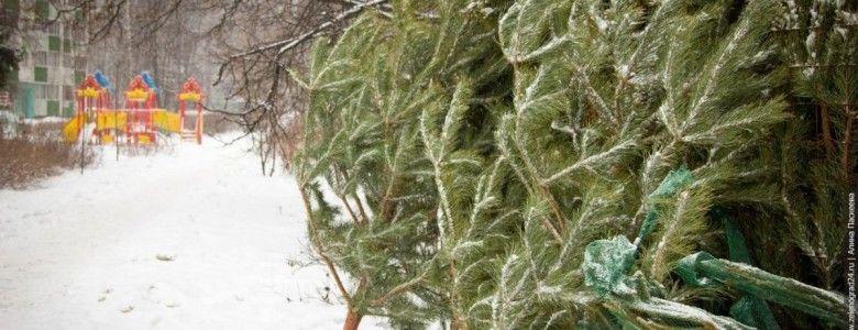 """""""Нашел"""": крымчанина поймали на обочине дороги со срубленной краснокнижной сосной"""