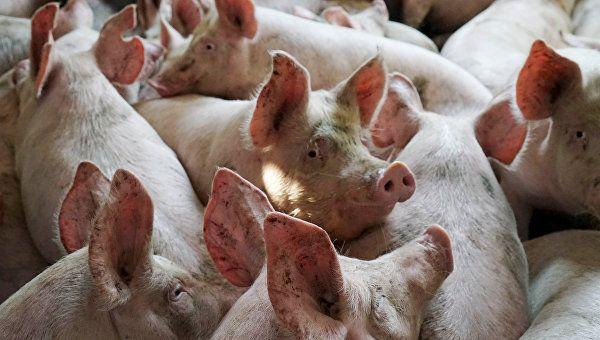 ЕСнетребует денежных компенсаций отРФ зазапрет поставок свинины