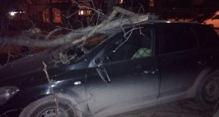 Ветер в Симферополе свалил дерево на машину
