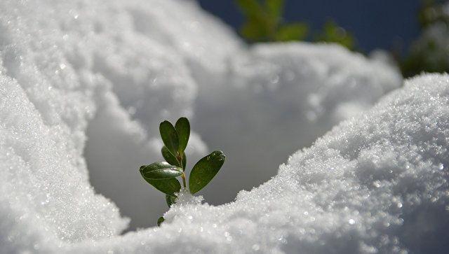 Холодное вторжение. На Старый Новый год в Крыму снег и до -6