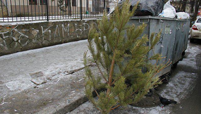 В Симферополе использованные новогодние елки пустят на удобрения