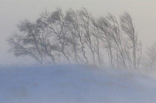 Буря усиливается: в Крым идут сильные метели, туман и гололедица