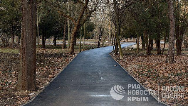 В Симферополе хотят высадить семиметровые сосны, секвойи и пихты