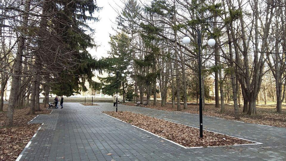 В Симферополе в сквере Мира спилят аварийные деревья