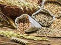 Крым пытаются уговорить продавать в Африку зерно