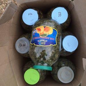 За 13 банок марихуаны крымчанину грозит 10 лет