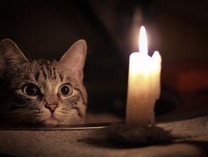 В каких районах крымской столицы в понедельник не будет света