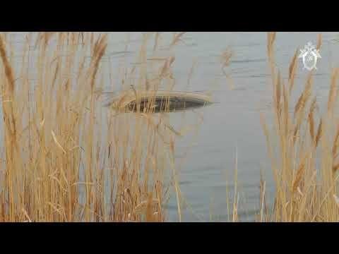 Видео подъема из воды расстрелянного авто Ларьковых