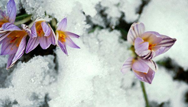 В Крым возвращается зима: синоптики рассказали о погоде на ближайшую неделю
