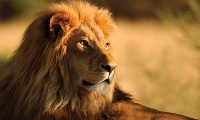 Из зооуголка Симферополя будут делать настоящий зоопарк