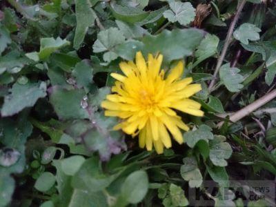 Цветущий огород