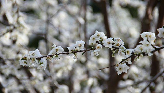 Синоптики рассказали, когда в Крым вернется весна