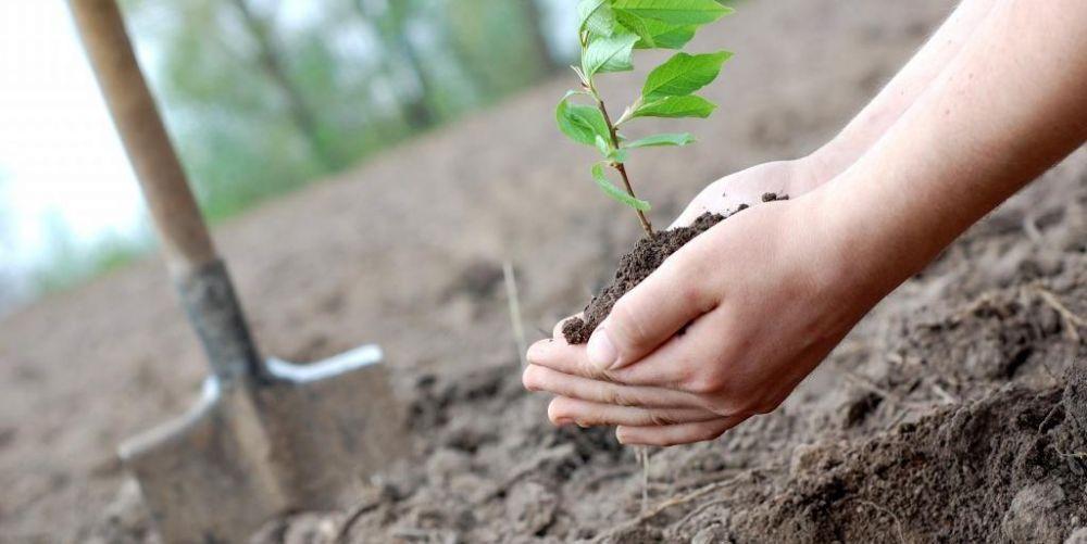 Озеленить город власти Симферополя планируют за счет предпринимателей